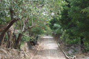 camino-nicaragua-microwd